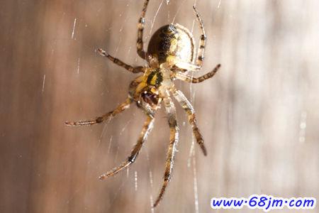 孕妇做梦梦见蜘蛛_梦见蜘蛛在爬预示将来会发生什么?_68解梦