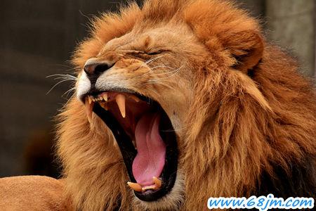 务实会是什么意思_梦见狮子是什么意思有什么预兆_周公解梦